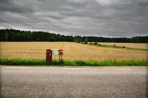 foresta svedese